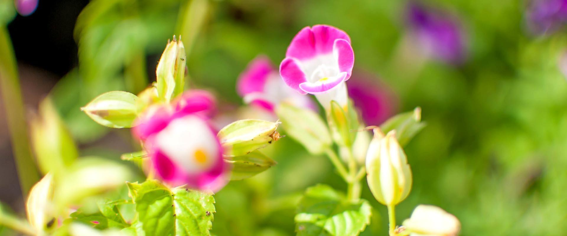 destaque flores